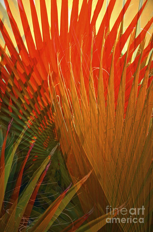 Palm Photograph - Mexican Palm by Gwyn Newcombe