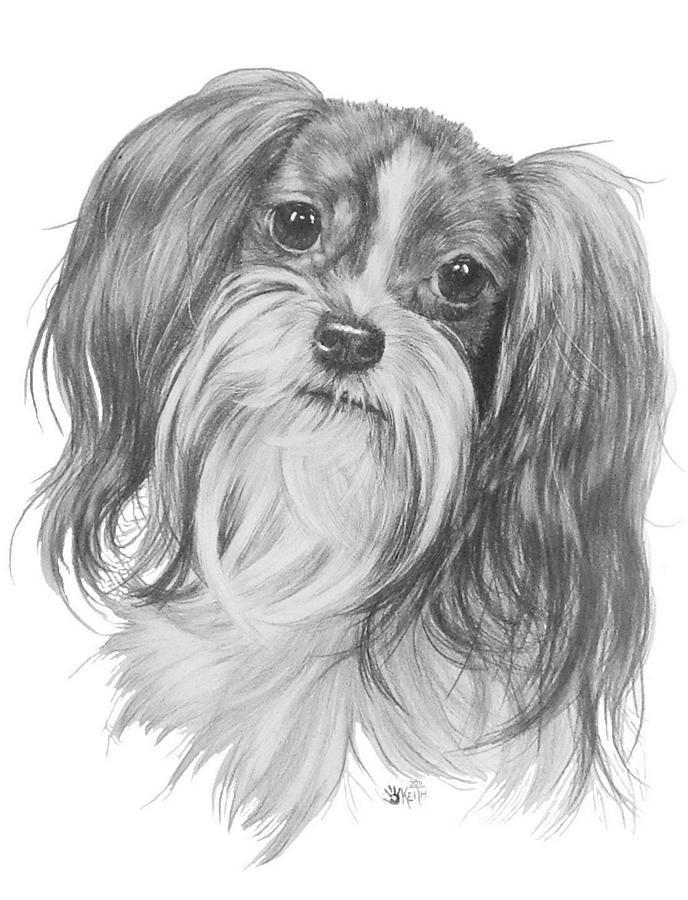 Designer Dog Drawing - Mi-ki by Barbara Keith