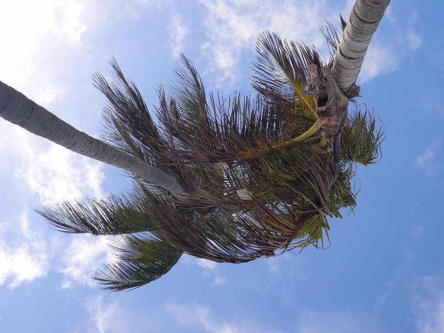 Miami Photograph - Miami Palms by JAMART Photography