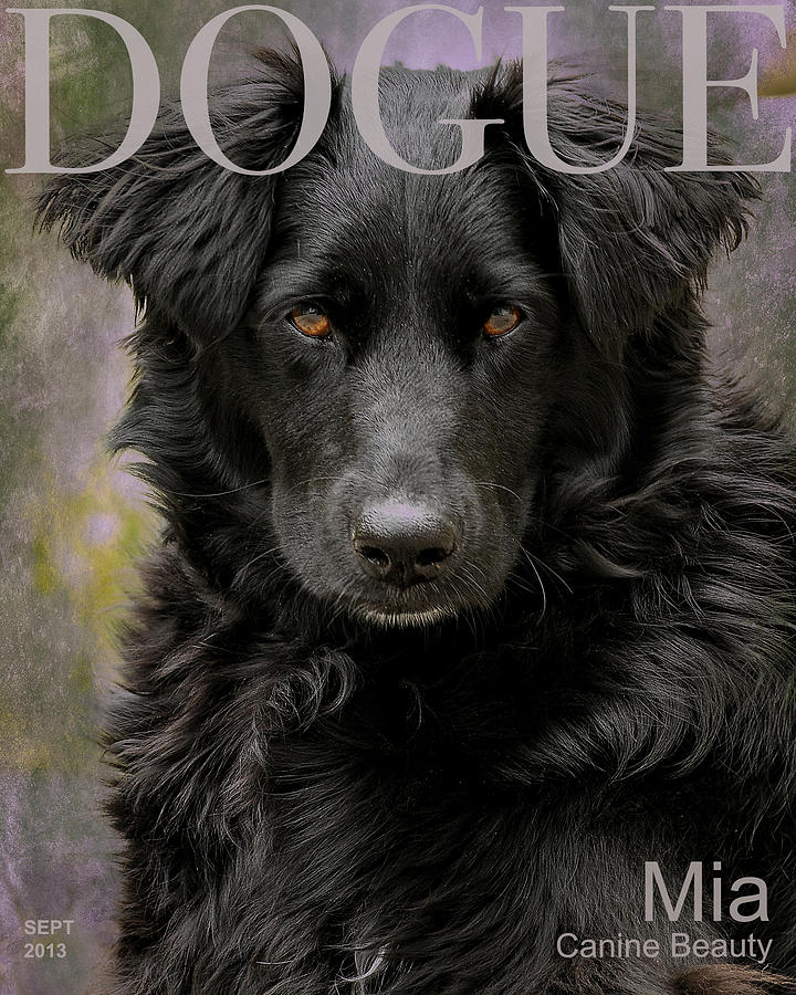 Dog Photograph - Mias Modeling Career by Liz Mackney