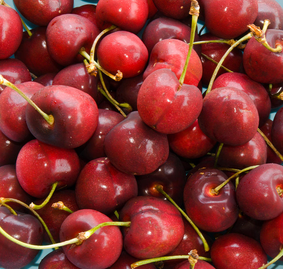 Michigan Cherries Photograph by Allan  Hughes