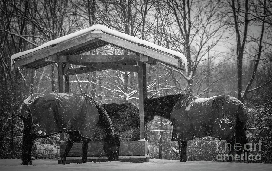 Michigan Winter Scenes Photograph