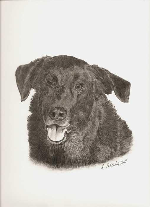 Dog Drawing - Mickey by Marlene Piccolin