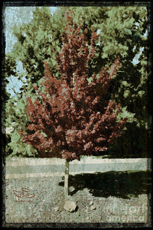 Tree Photograph - Mid Century Tree by Beauty For God