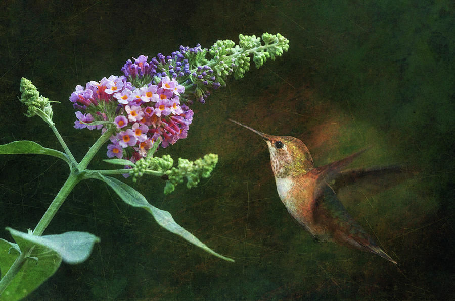 Hummingbird Photograph - Mid-summer Delight 2 by Angie Vogel