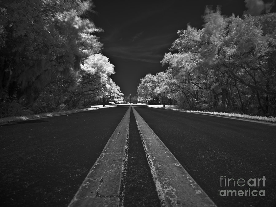 Infrared Photograph - Middle Line by Rolf Bertram