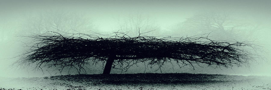 Britain Photograph - Middlethorpe Tree In Fog Gray And Green Panorama by Tony Grider
