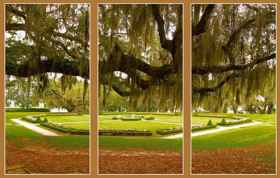 Middleton Gardens Triptych by Bill Barber