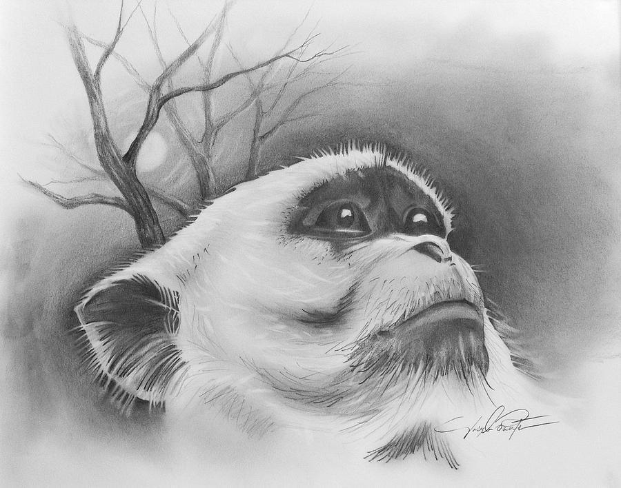 Monkey Drawing - Midnight Bandit  by Joseph Palotas