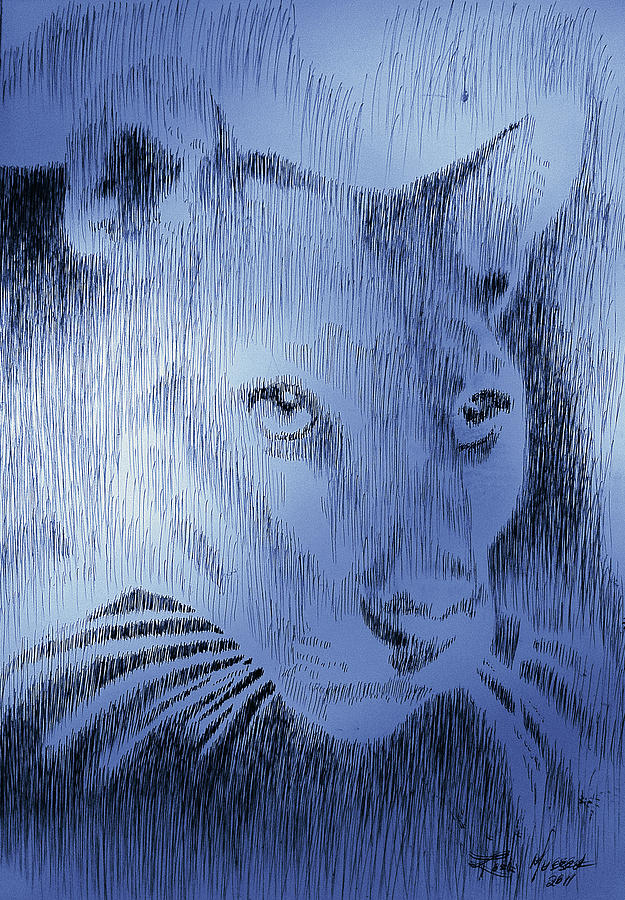 Panther Drawing - Midnight Blue by Robbi  Musser
