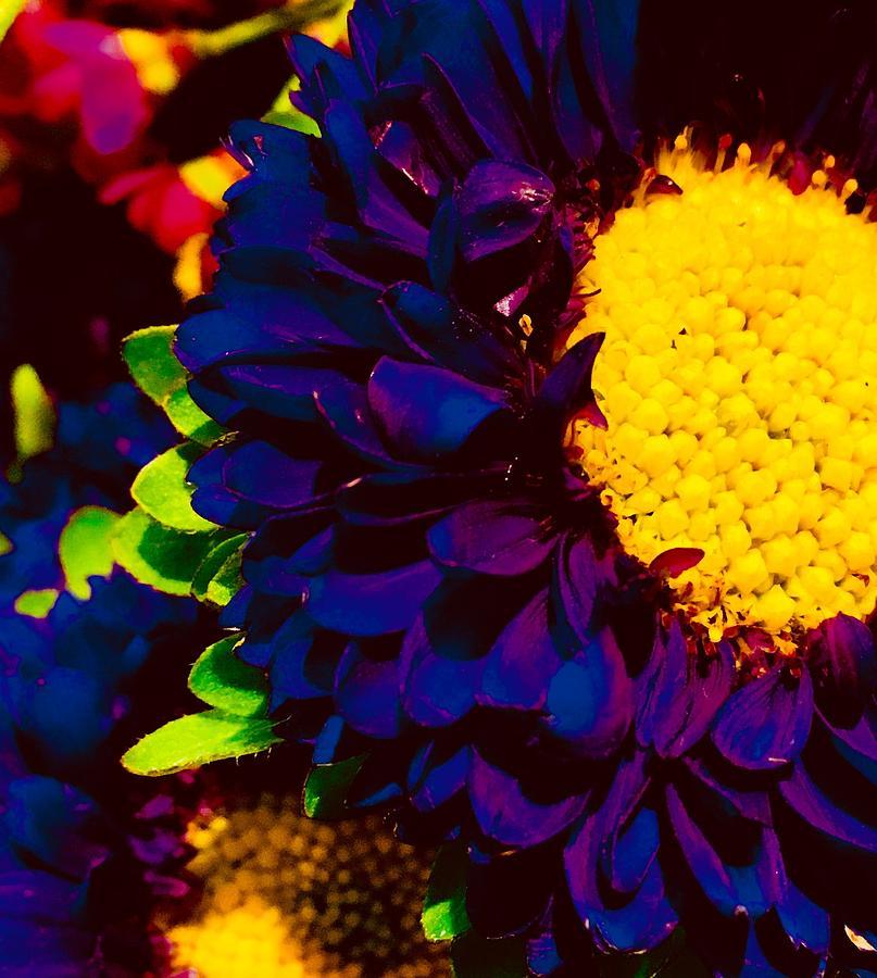 Midnight Flowers Photograph