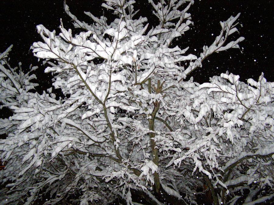 Winter Photograph - Midnight Snow 3 by Christine Sullivan Cuozzo