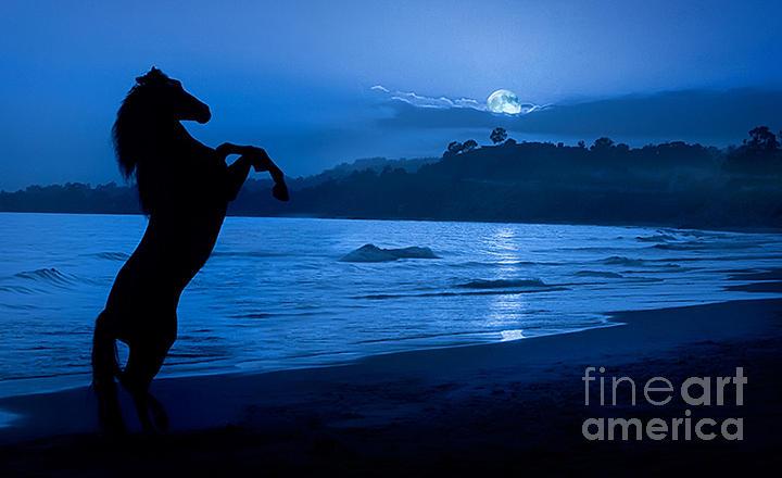 Horse Photograph - Midnight Stallion by Patty Hallman