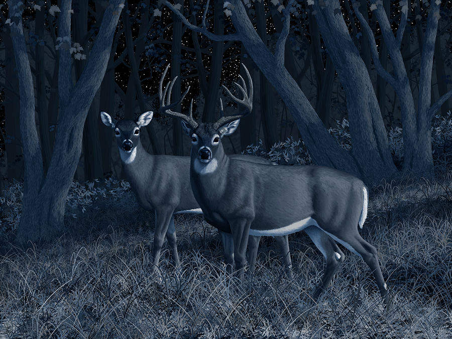 Deers Painting - Midnight Stroll - Whitetail Deer At Night by Crista Forest