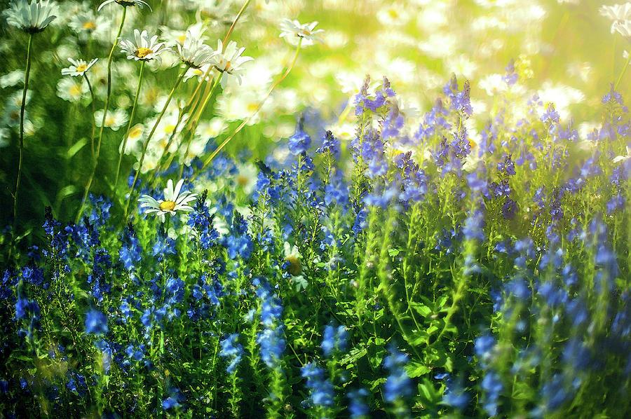 Midsummer Flowers Sweden Photograph By Mikael Jenei