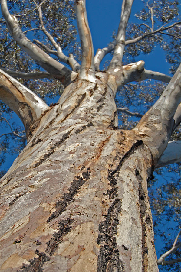 Bark Photograph - Mighty by Jean Booth