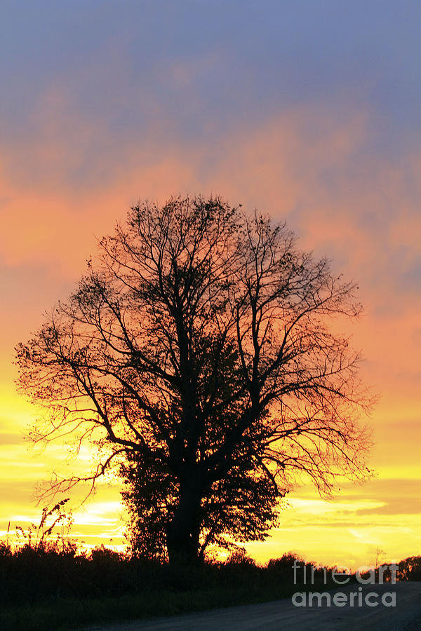 Sunset Photograph - Mighty Oak At Sunset by Kathy DesJardins