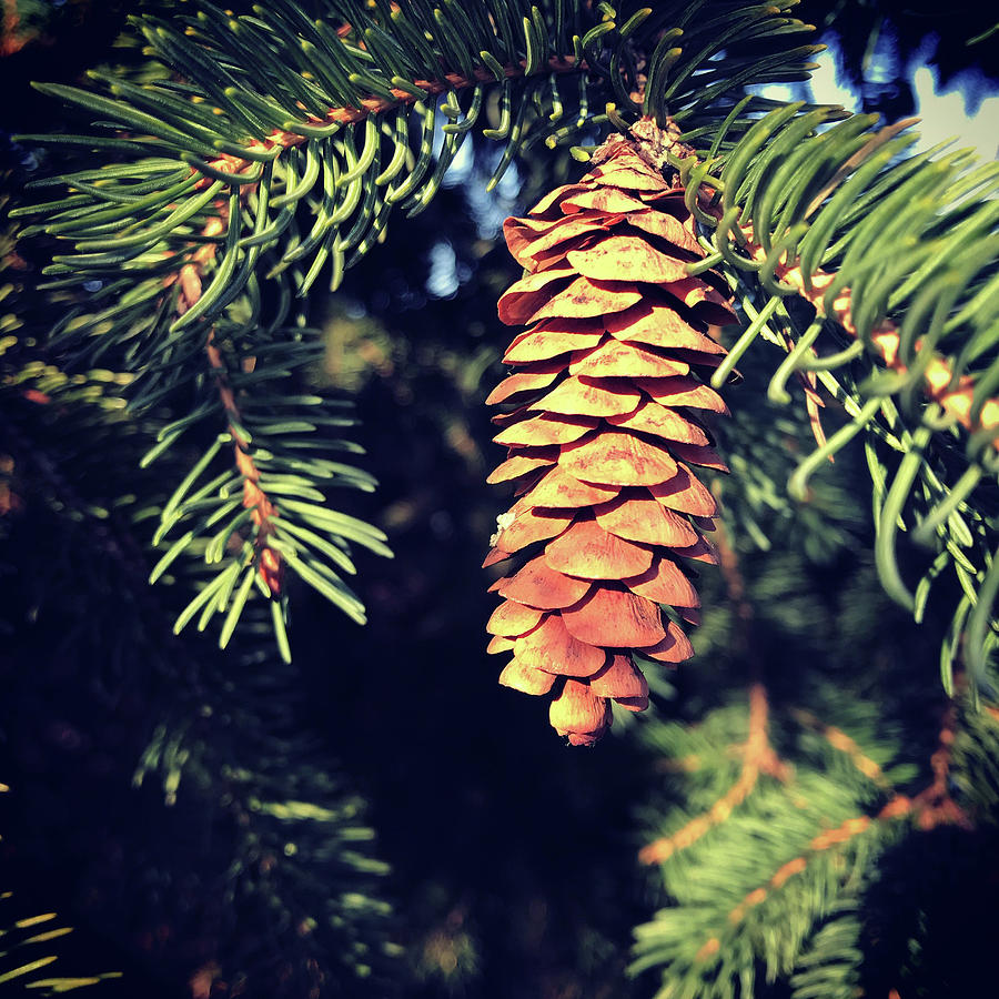 Mighty Pinecone by Lori Knisely
