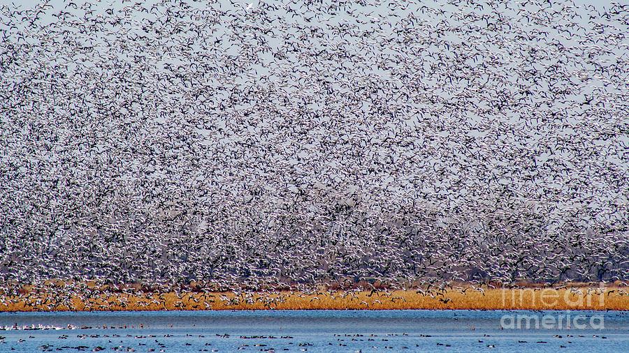 Migration Photograph