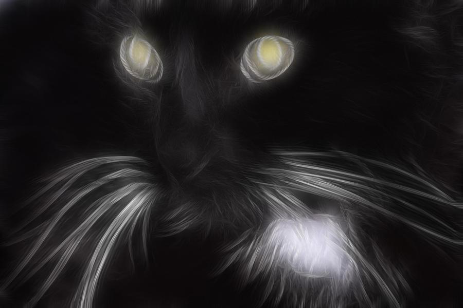 Animal Digital Art - Mikey by Holly Ethan