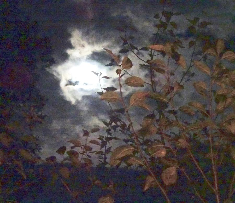 Miles of Moonlight by Catherine Arcolio