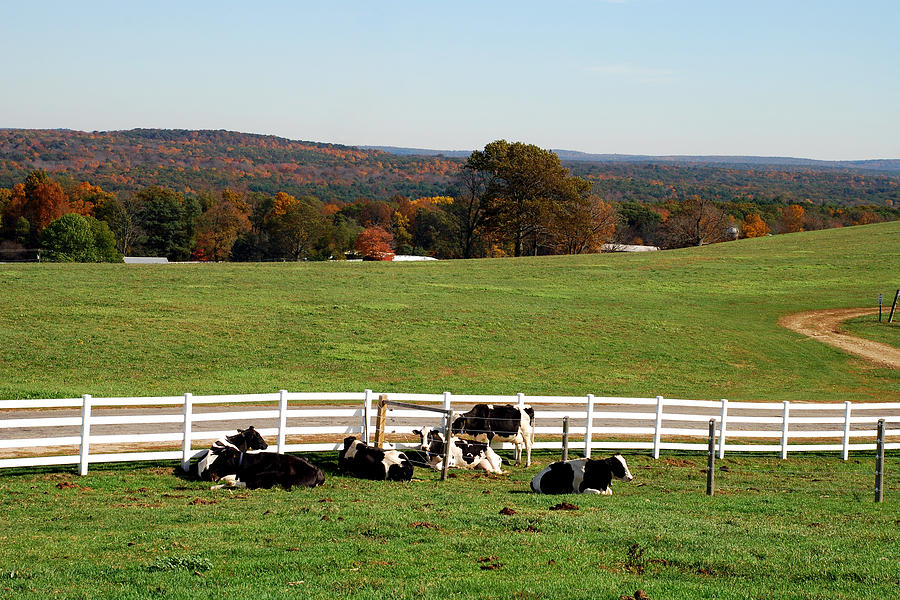 Country Photograph - Milk Break by Mark Wiley