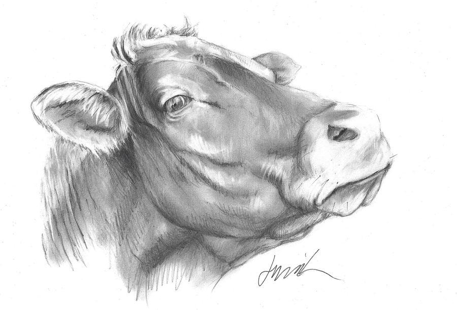 Graphite Pencil Drawing Drawing - Milk Cow by Jacki Kellum