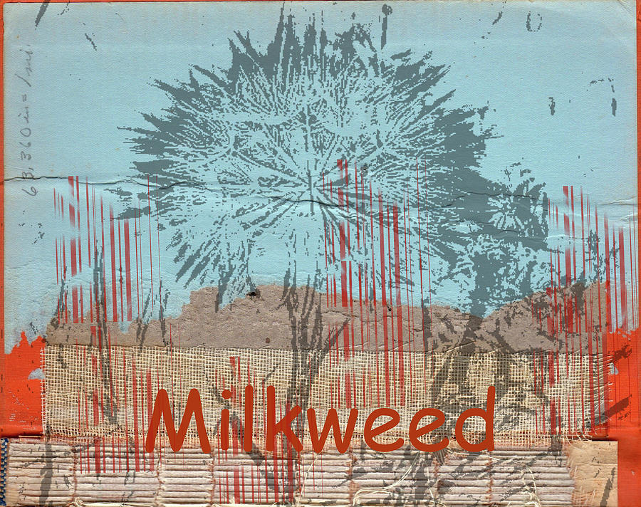 Collage Photograph - Milkweed Collage by Cynthia Powell