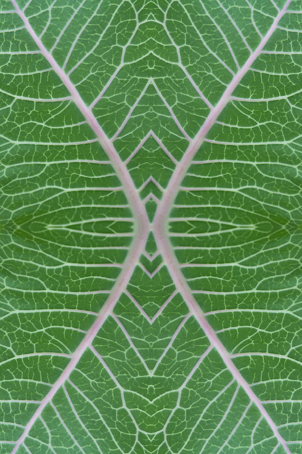 Milkweed Veins Quad Photograph