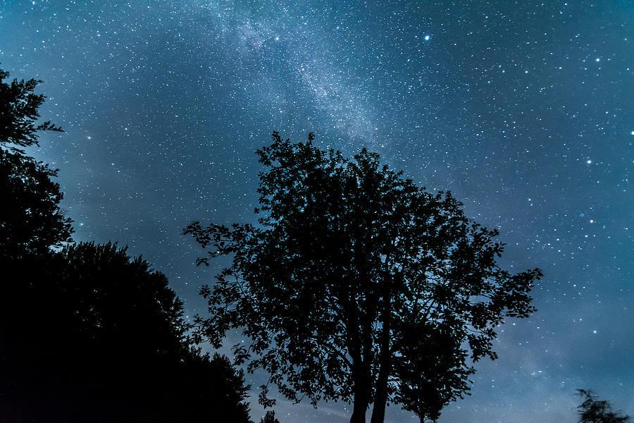Milky Way Trees Photograph