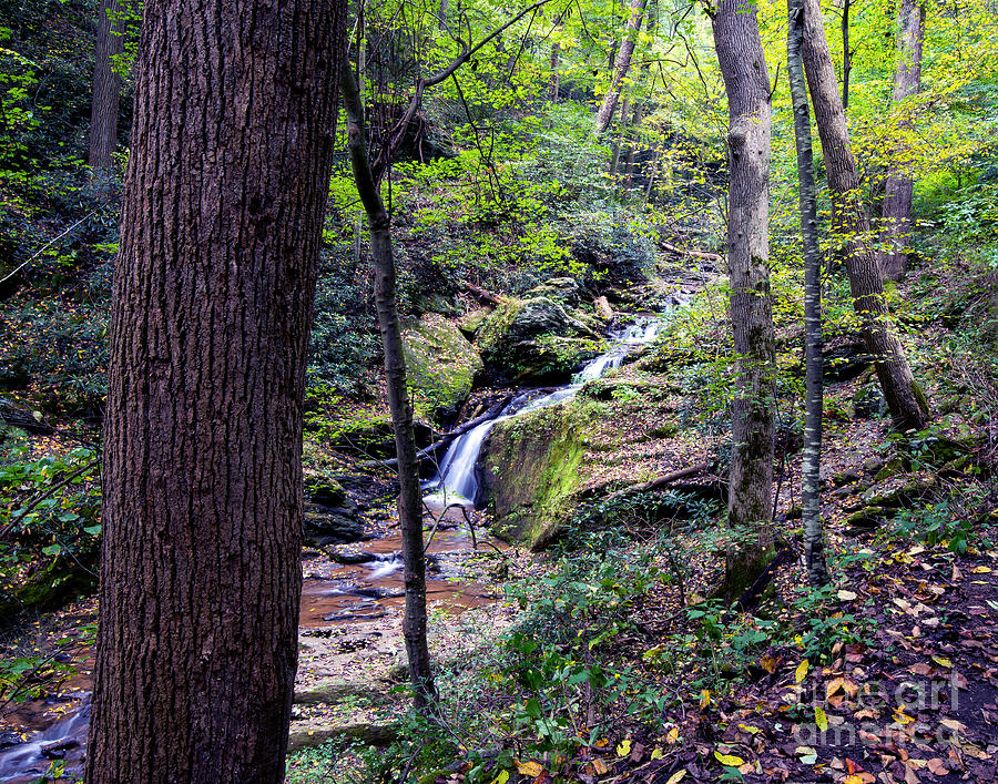 Mill Creek Falls Photograph - Mill Creek Falls by Eric Killian