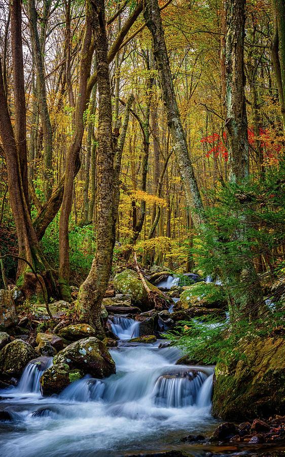 Mill Creek in Fall #1 by Joe Shrader