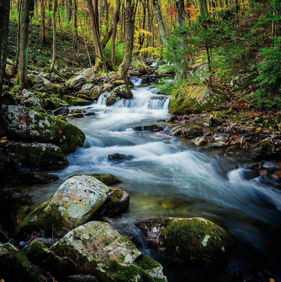 Mill Creek in Fall #3 by Joe Shrader