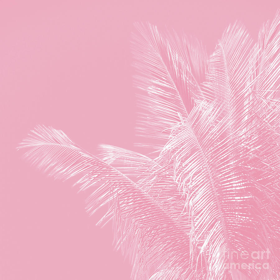 Millennial Pink Illumination Of Heart White Tropical Palm