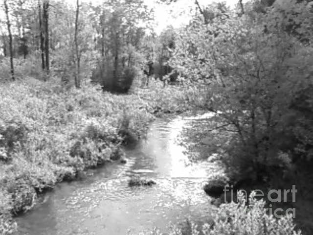 Landscape Photograph - Millstone Creek by Melissa Miller