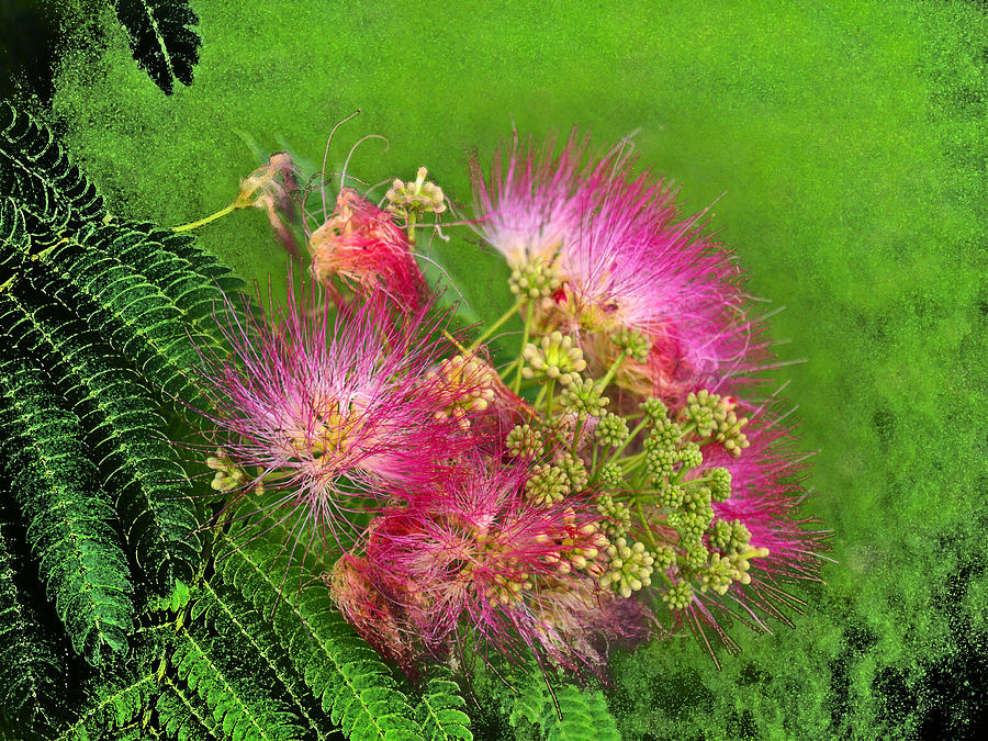 Floral Photograph - Mimosa II by James Granberry