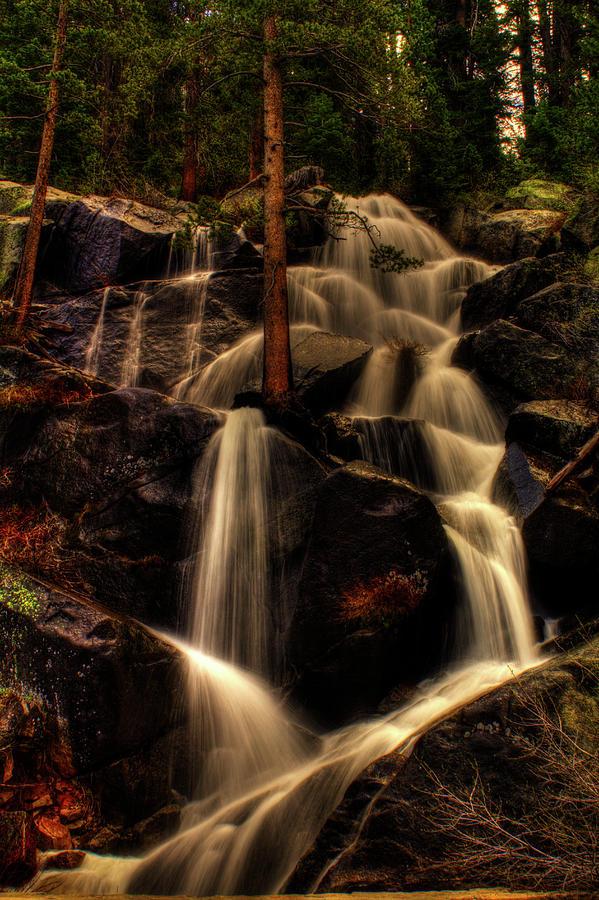 Quaking Aspen Falls Along Tioga Pass Photograph
