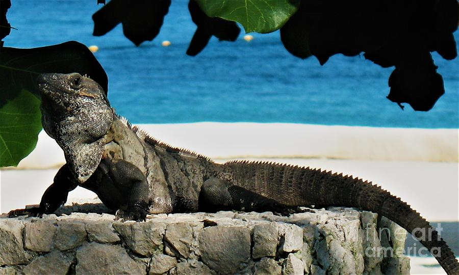 Miniature Dragon Photograph - Miniature Dragon by Patti Whitten