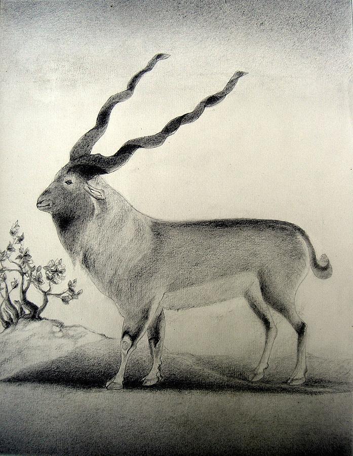 Mughal Miniature Drawing - Miniature Drawing Of Oryx by Caroline  Urbania Naeem