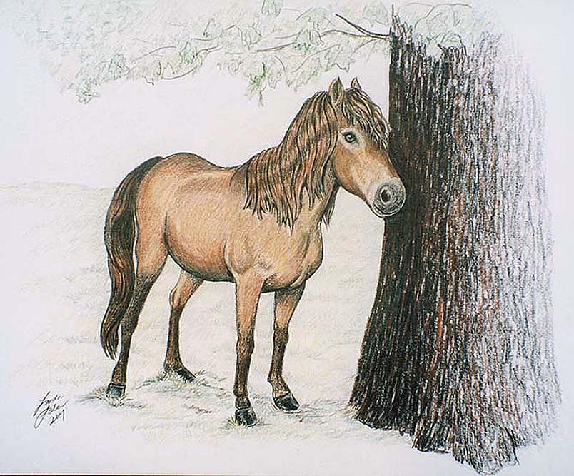 Horse Drawing - Miniature Horse by Linda Sala