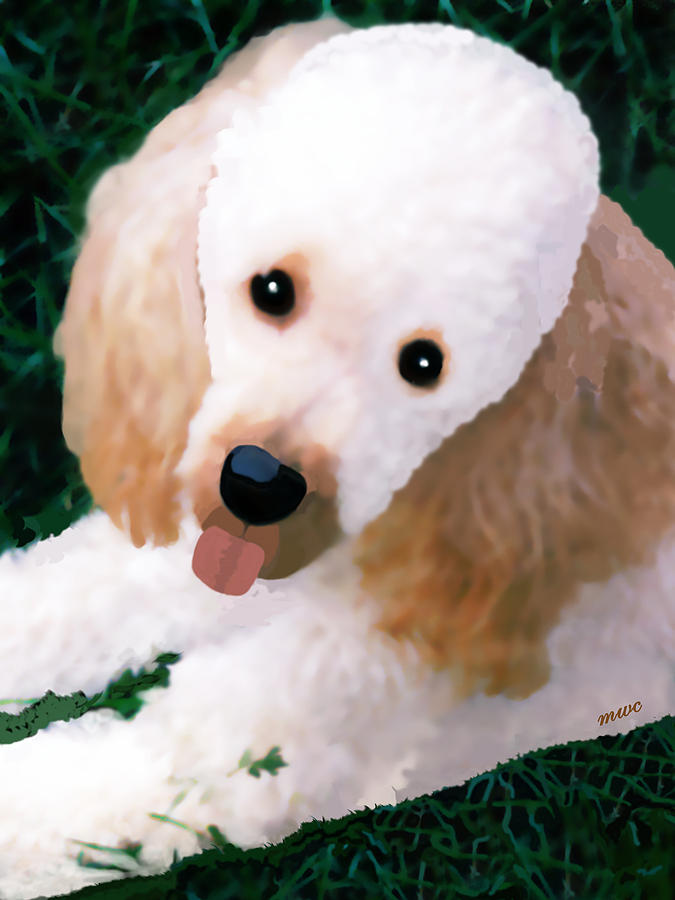 Miniature Poodle Albie by Marian Cates