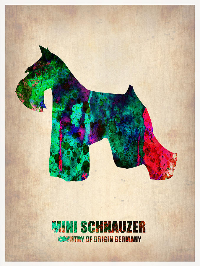 Miniature Schnauzer Painting - Miniature Schnauzer Poster 2 by Naxart Studio