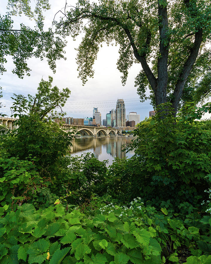 Minneapolis Through the Trees by Mike Evangelist
