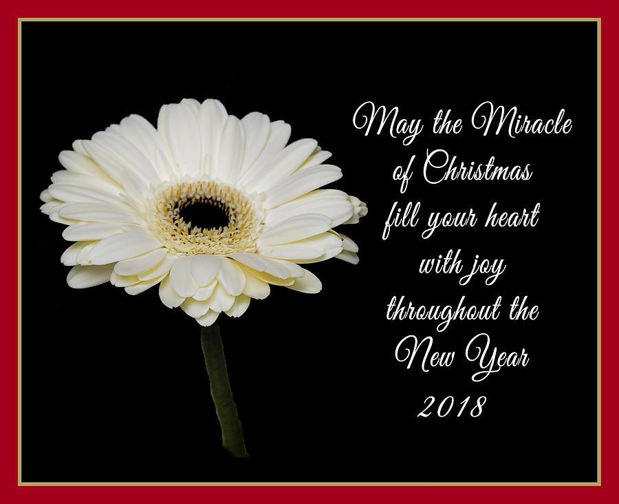 The Miracle Of Christmas.Miracle Of Christmas By Connie Mitchell
