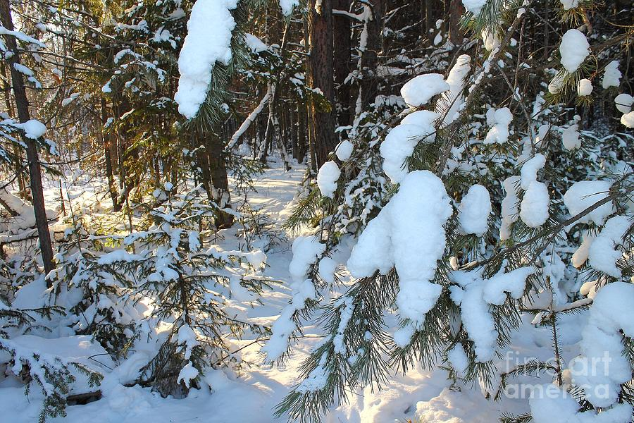 Miracles In The Woods In Winter. Photograph