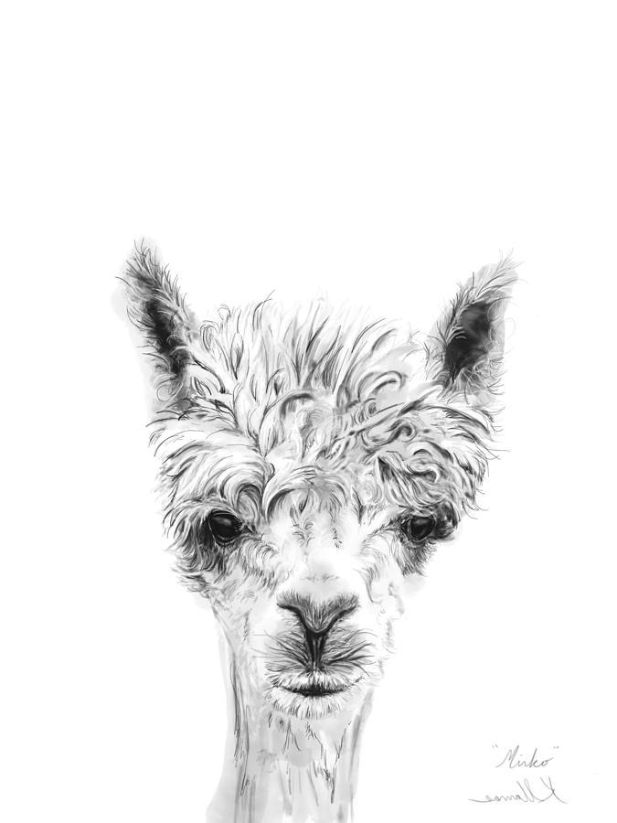 Llamas Drawing - Mirko by K Llamas