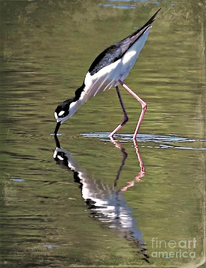 Stilt Photograph - Mirror Image Stilt II by Diann Fisher
