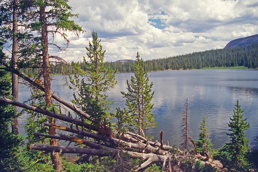 Forest Photograph - Mirror Lake Utah 3 by Steve Ohlsen