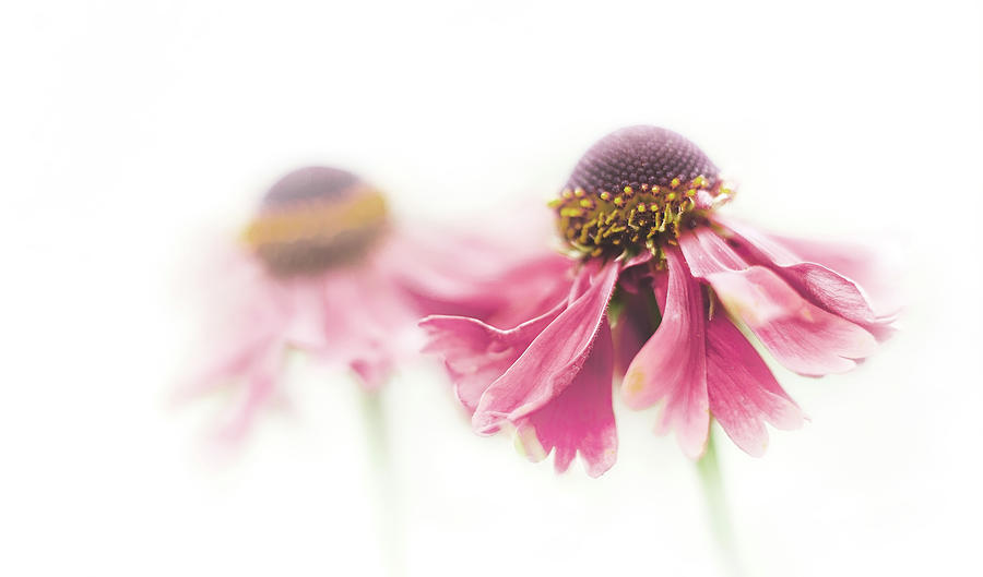 Flowers Photograph - Mirrored Beauty by Ina Hoekstra