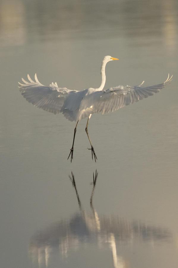 Mirrored Landing Photograph by Karl Mahnke